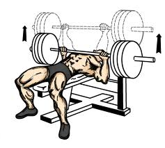 Dumbbell and Barbell Bench Press