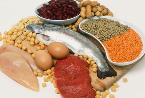 The effects of dietary protein on body composition