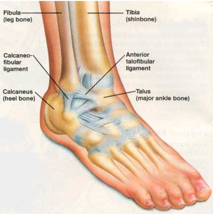 Ankle sprain management